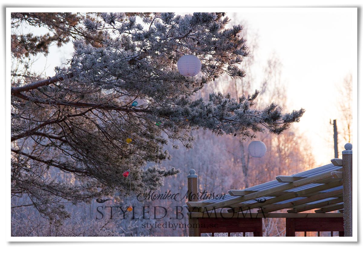 foton vintern 2018 a